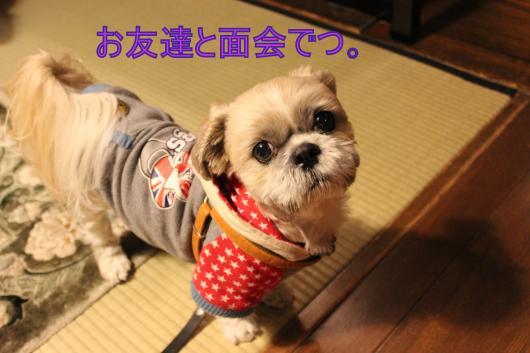 ・搾シ蝕MG_1871_convert_20130113215724