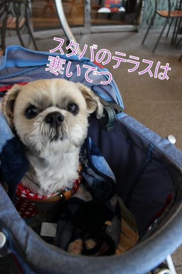 ・搾シ蝕MG_1923_convert_20130115005621