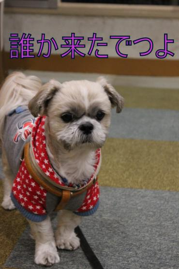 ・搾シ祢MG_1969_convert_20130114230106