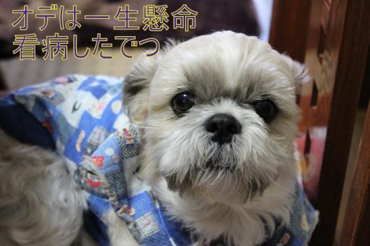 ・搾シ僮MG_2837_convert_20130122123917