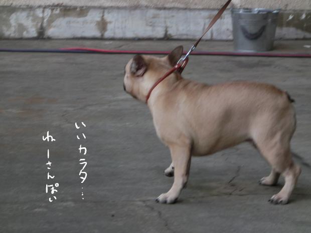 05_20121111000059.jpg