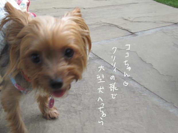 09_20121009001241.jpg