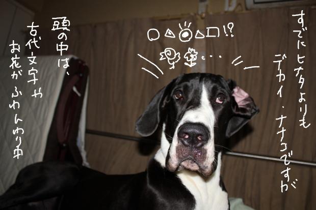10_20121005053035.jpg