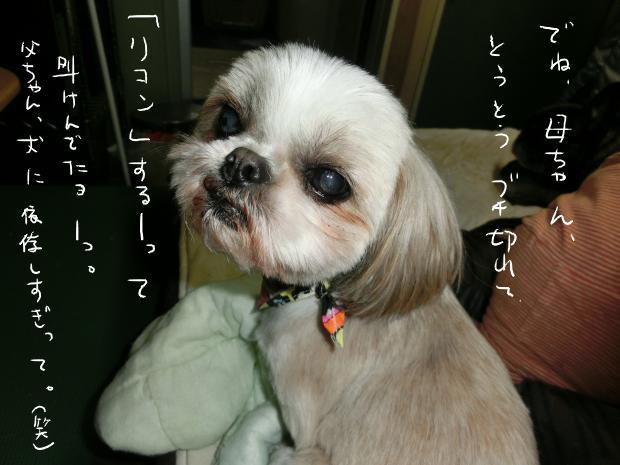 12_20121211003412.jpg