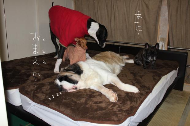 29_20121211004151.jpg
