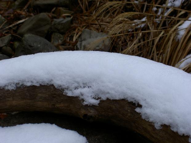 谷の流木の上に積もる雪