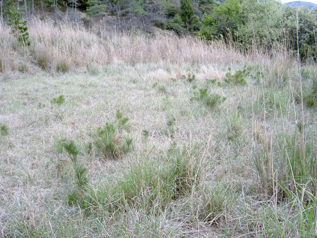 ススキを主体とする多年草群落