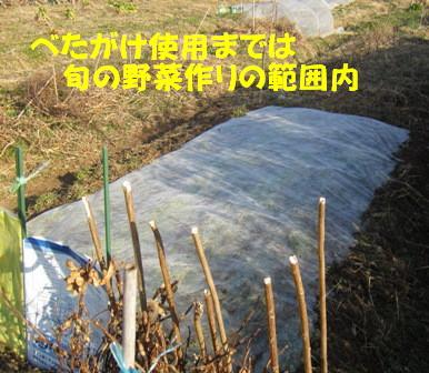 小松菜播種春第1弾 (1)