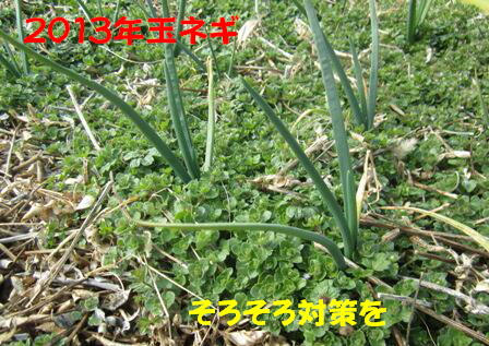 2013.2草生