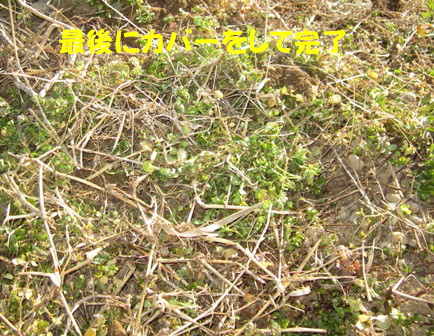 ジャガイモ植え付け (6)