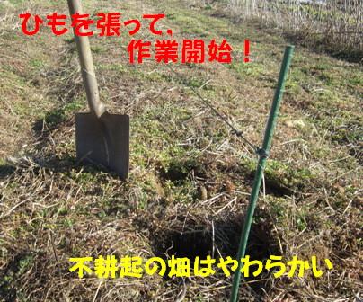 ジャガイモ植え付け (1)