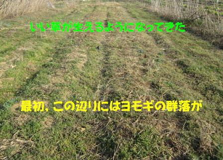 自然農へ4年目 (5)
