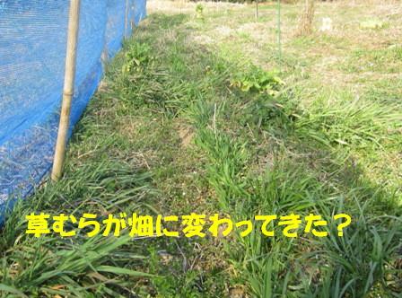 自然農へ4年目 (3)