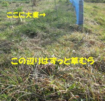 自然農へ4年目 (1)