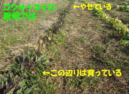 自然農へ4年目 (4)