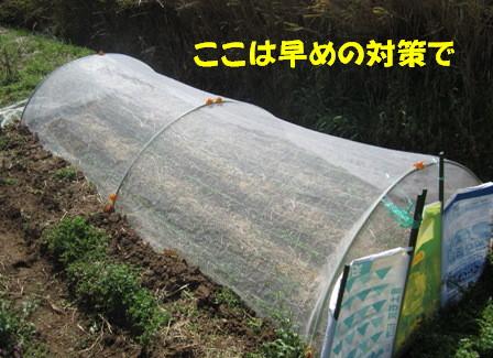 小松菜(春①) (4)