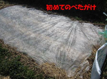小松菜(春①) (1)