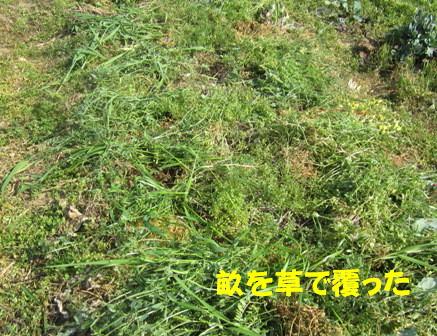 遅霜対策Ⅱ (オカノリ2)