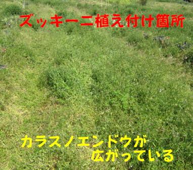 本格的夏野菜定植 (1)
