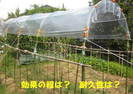 トマト雨除け (2)