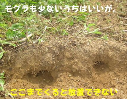 不耕起→耕起3