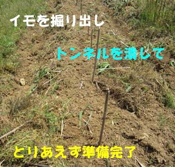 不耕起→耕起4