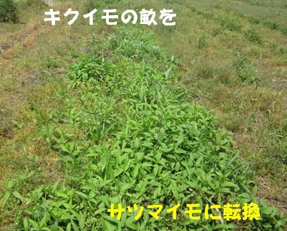 不耕起→耕起1