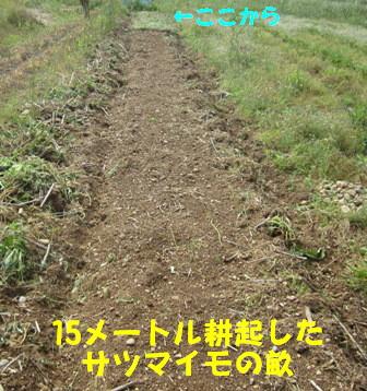 モグラ道潰し (1)