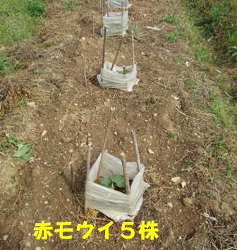 モグラ道潰し (4)