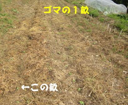 モグラ道潰し (3)