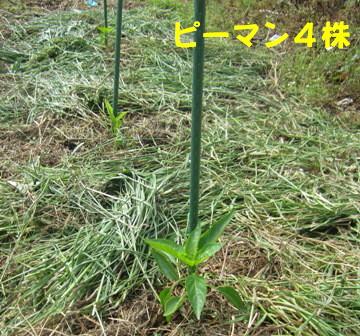 モグラ道潰し (2)