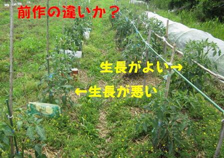 世界一トマト(農園)