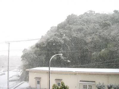 雪の日25.1.14