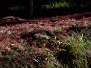 2013 小国神社の紅葉