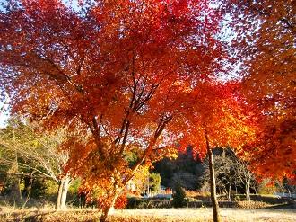 集落の紅葉