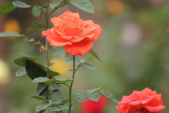 55_20121019201234.jpg