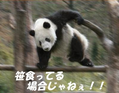 sasa_moto.jpg
