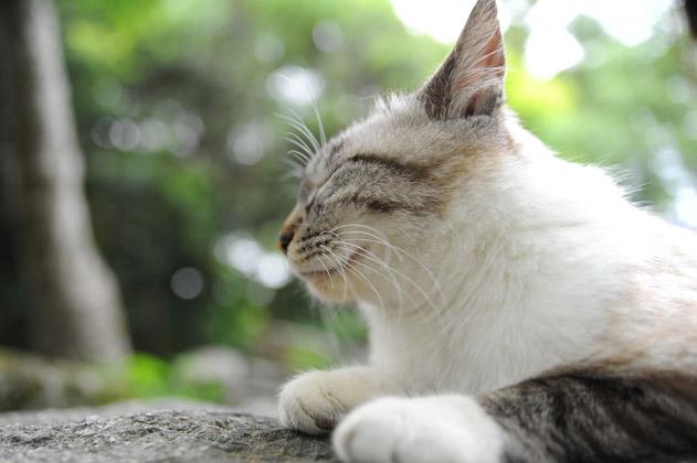寝たフリ/聞き耳