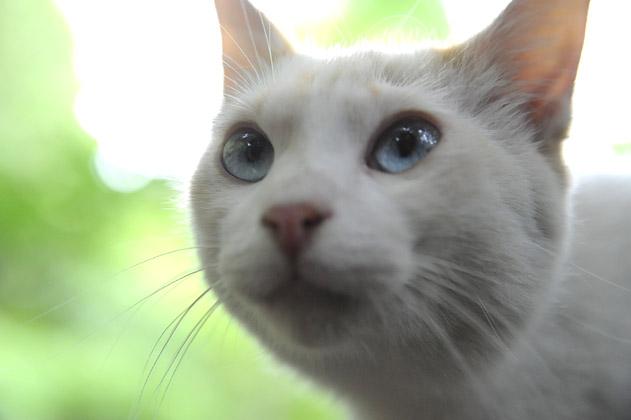 チャミの瞳
