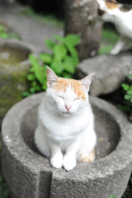 母猫のおねだり