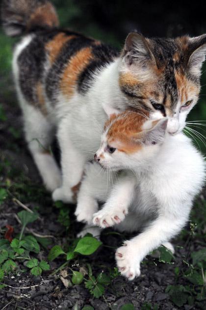 仔猫連れてきたニャン!