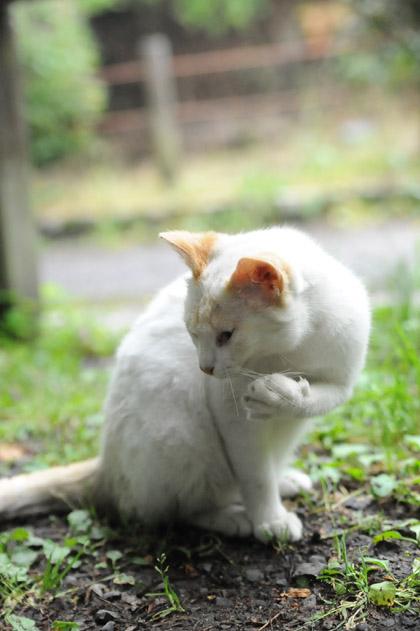 チャミはもう仔猫卒業!?