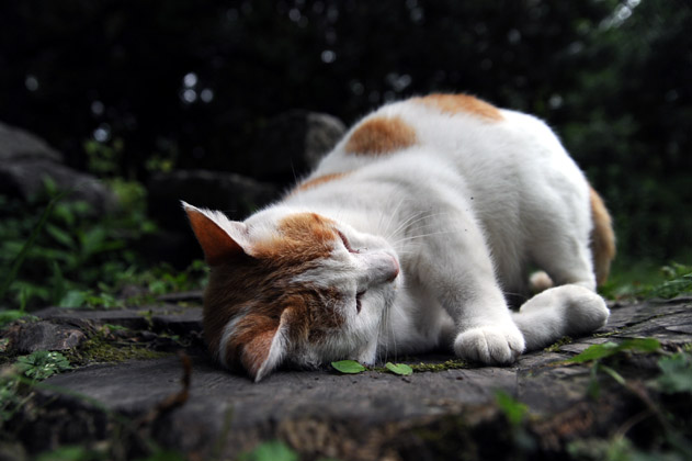 母猫ゴロン