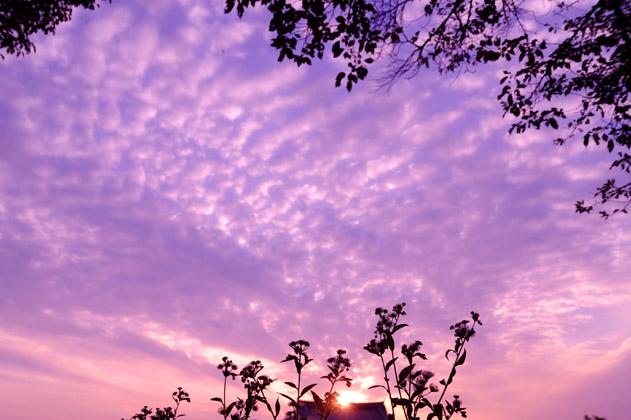夕焼け空とハルジオン