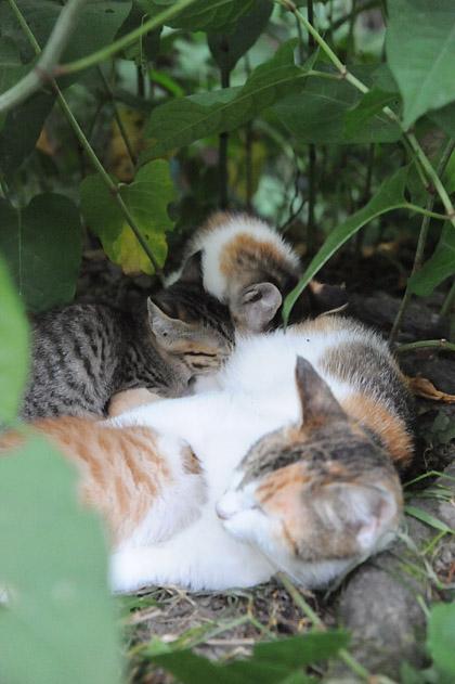母猫と仔猫達