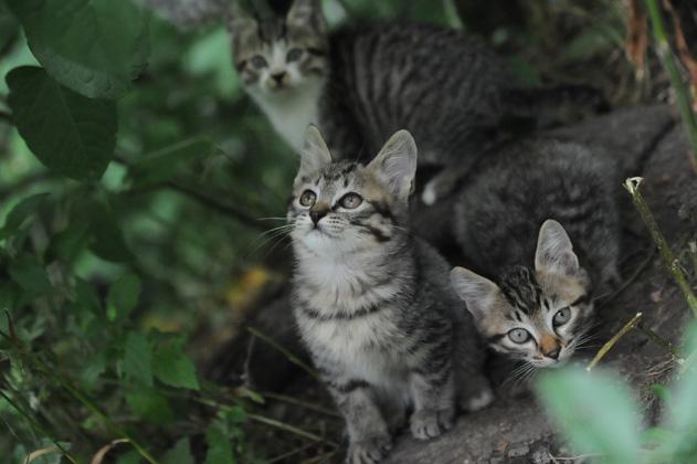 仔猫が三匹