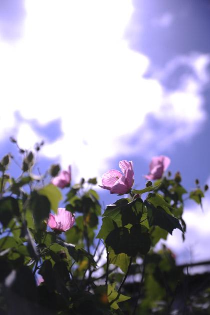 真夏の午後の日差
