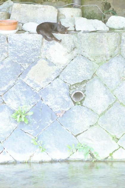 真夏の午後の黒猫