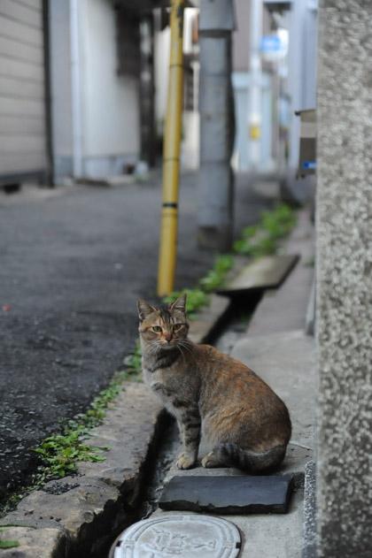 大阪路地猫