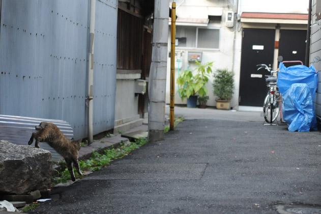 大阪路地猫追跡